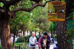 The Birdmen of Beijing