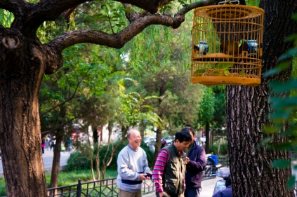 The Birdmen of Beijing