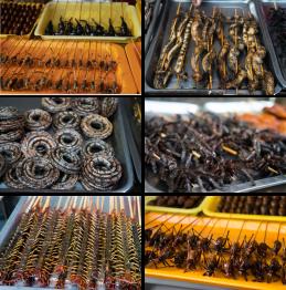 Exotic Treats on Wanfujing Food Street