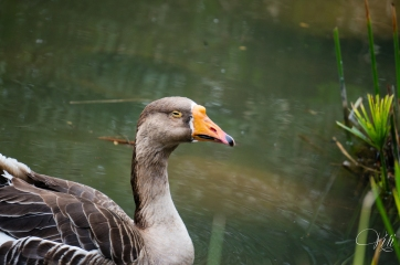 Stoner Duck. His eyes don't open further than that
