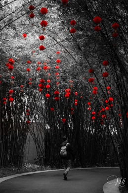 The red lanterns of Chinese New Year