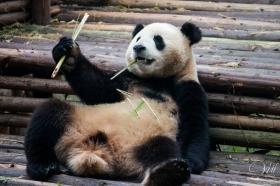 Dude...bamboo