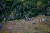 Long Range Traverse, NFLD
